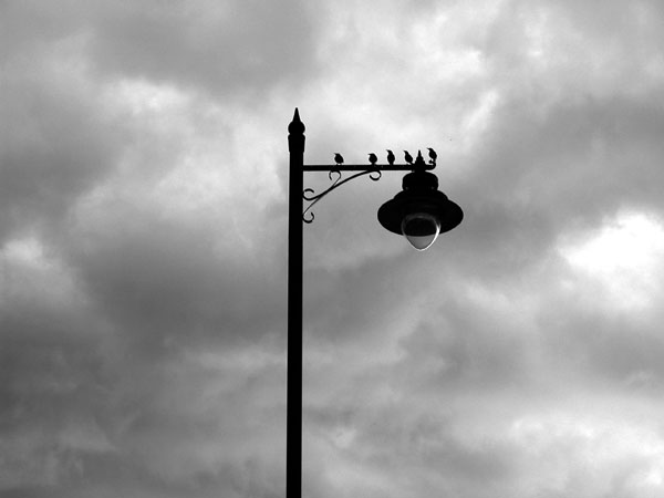 birds -- nikon coolpix 5700